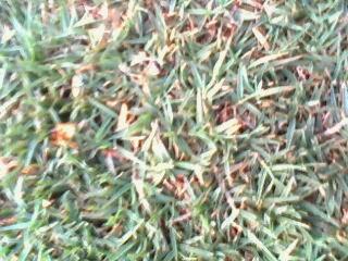 Taman rumput dan Desain taman rumput