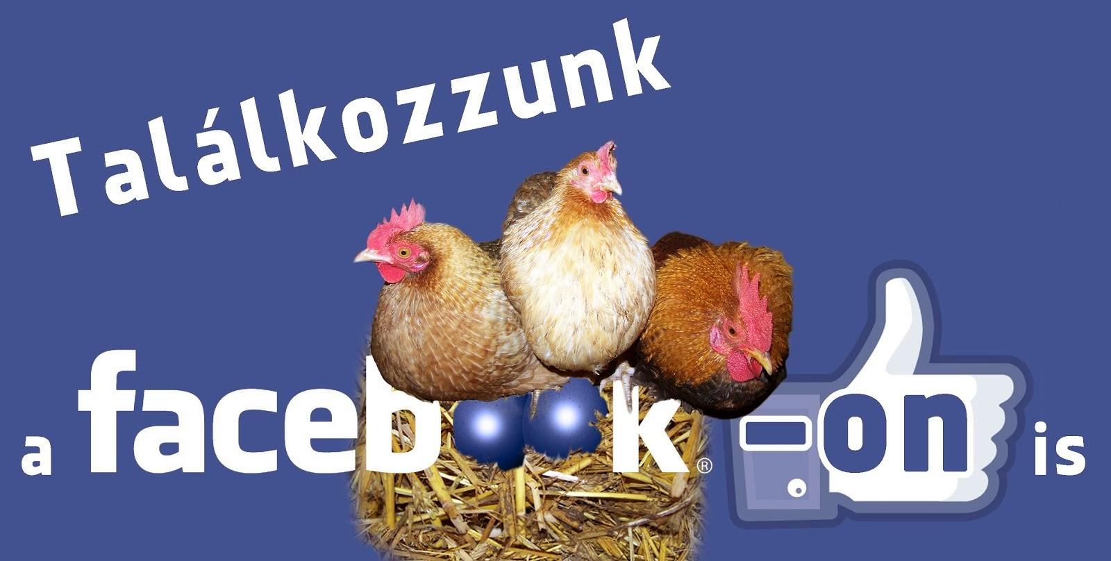 Portánk már a Facebookon is!