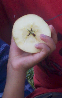 5-Pointed Star in Apple