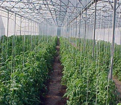 Invernaderos definicion de invernadero for Plantas para invernadero