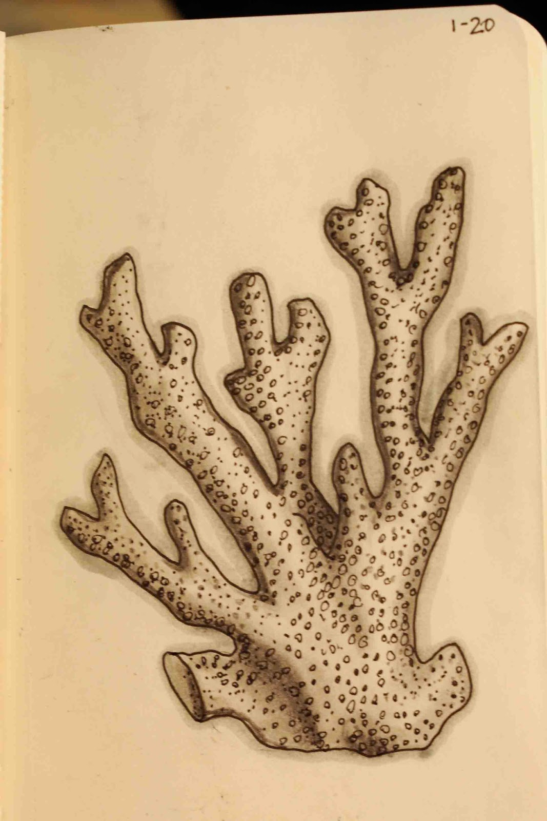 how to draw easy coral