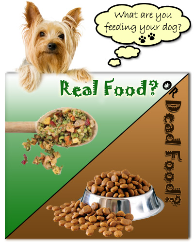 What are you feeding your dog? - {Back to Eden Health Ministry}