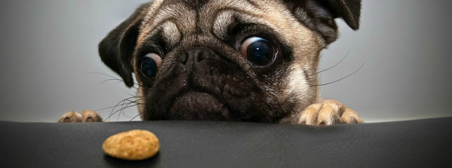 Cutey Dog With Cookie Cover Photo - Funny