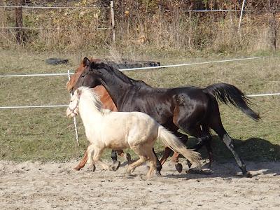 Konie, jazda konna, pensjonat dla koni w Węgrzcach