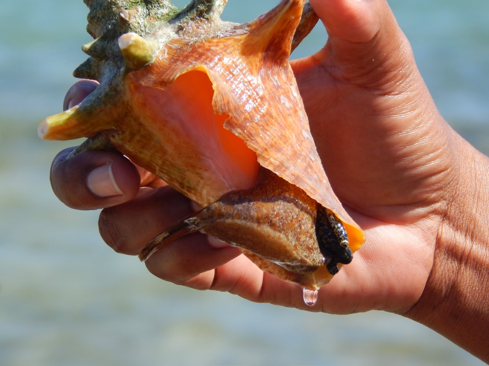 Lord flies conch shell symbolism essay