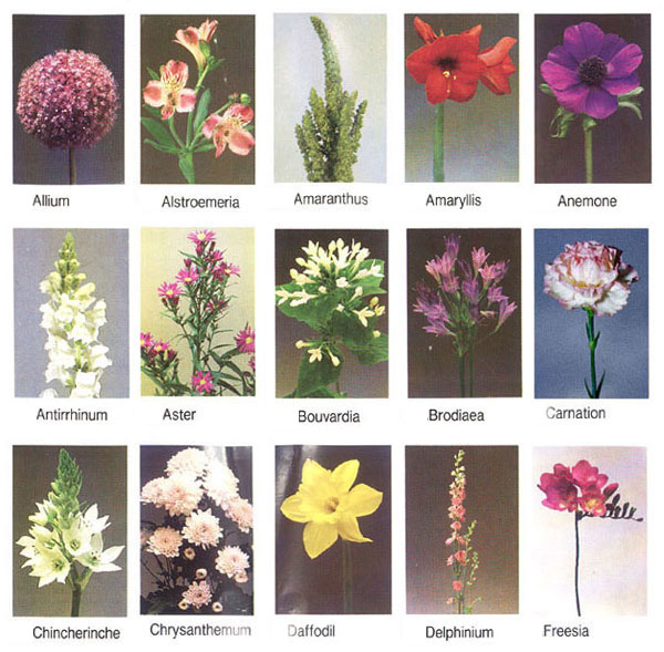 Flowers For Flower Lovers Flowers Names