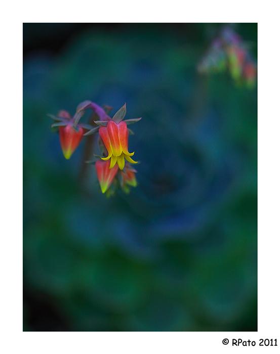 10 flores raras Pisos com - Ver Imagenes De Flores Raras