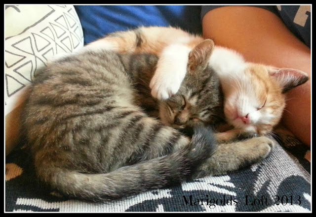 sibling kitty love :)