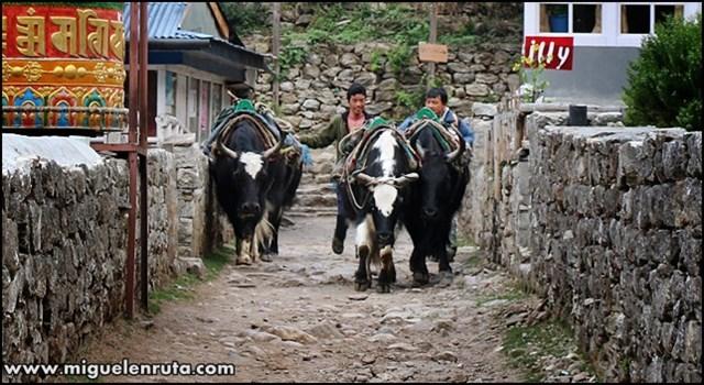 Phakding-Namche-Bazzar-Trek-CB-Everest_2