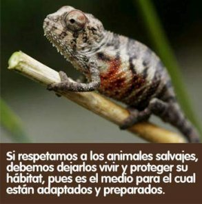 Muy humano: Fin de la biodiversidad.