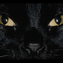 kucing persia imut @ Digaleri.com