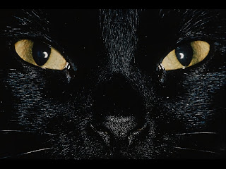 black cat face wallpaper animal digital photo