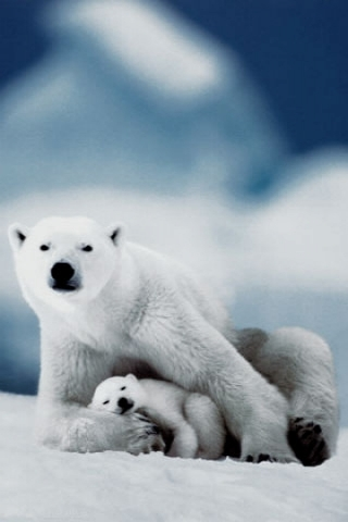 iPhoneZone: 20 Awesome Animal Baby Wallpapers For iPhone