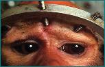 Stop Vivisezione