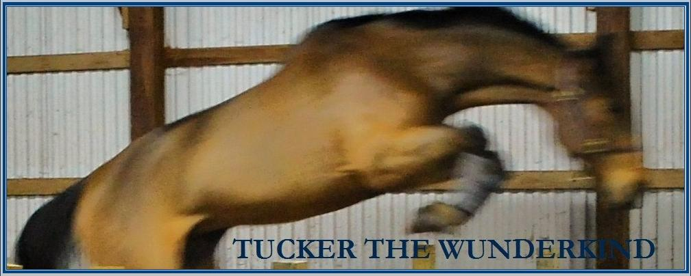 Tucker the Wunderkind