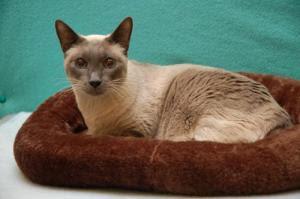 Pet Md Cat Diseases