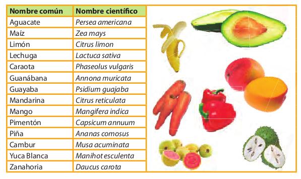 Nombres cientificos de plantas wikipedia driver nokia c7 for Plantas hortalizas ejemplos