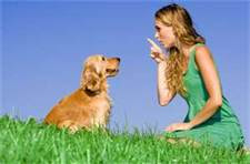 Dog Training Tips To Tame Your Dog
