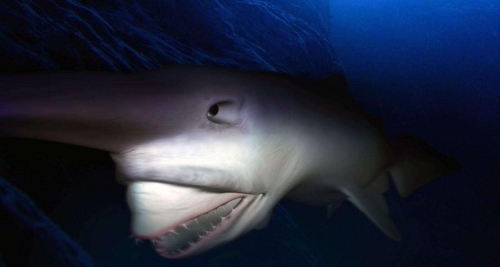 What does the goblin shark eat since goblin sharks live at the bottom