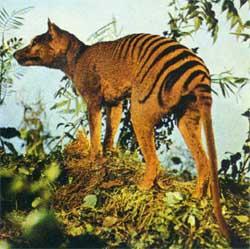 imagenes de animales en peligro - Imágenes de Animales en Peligro de Extinción