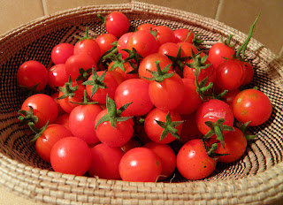 Basket of homegrown cherry tomatoes