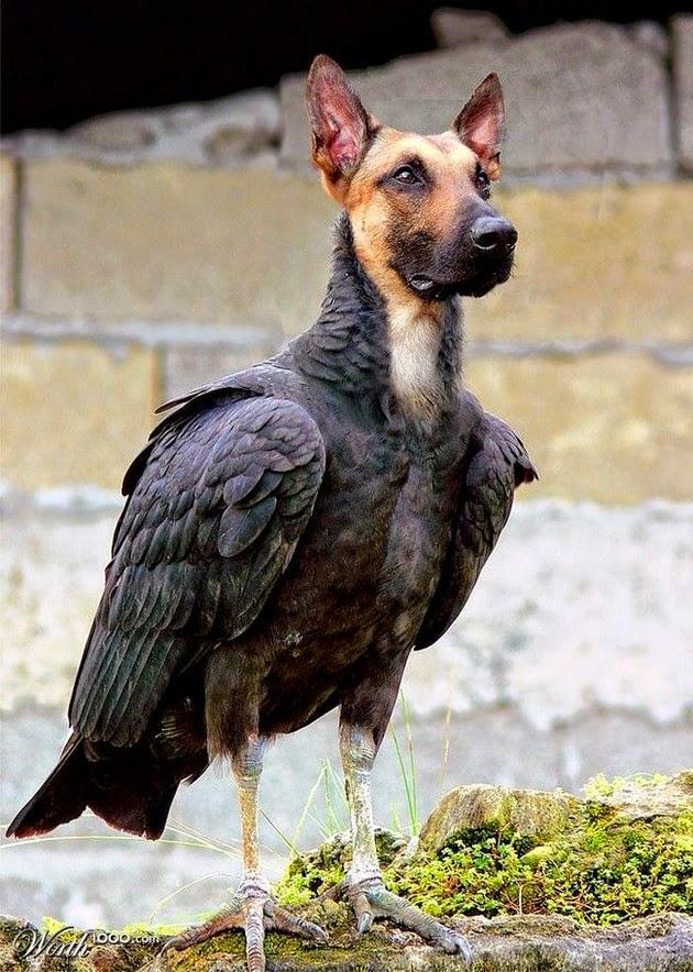 pet-head-for-birds-1