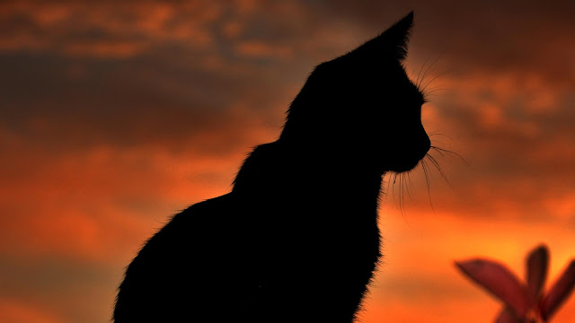 Sunset cat silhouette