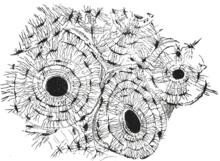 Hueso corte transversal