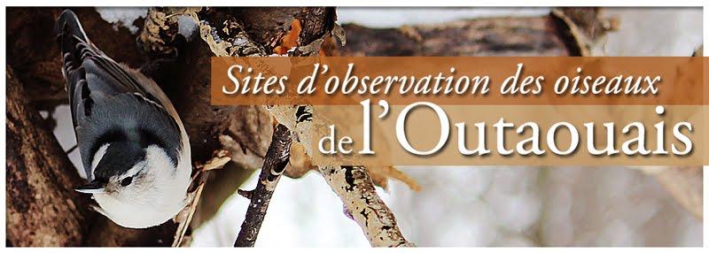 les oiseaux de l'Outaouais