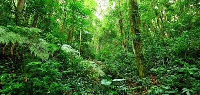5 Orang Lelaki yang Tersesat di Tengah Hutan