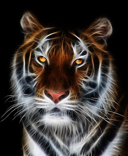 Tiger Animal High Resolution Pictures