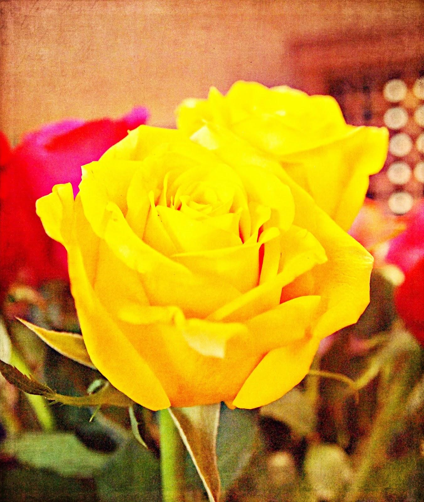 texture yellow rose