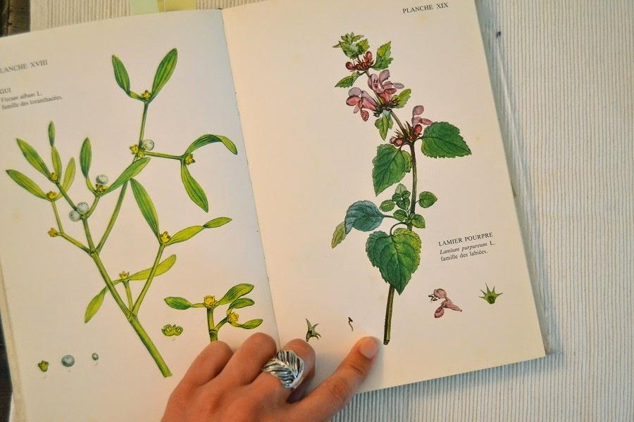extrait livre botanique
