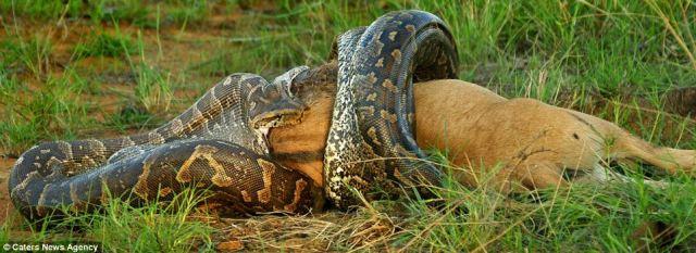 ular raksasa di dunia