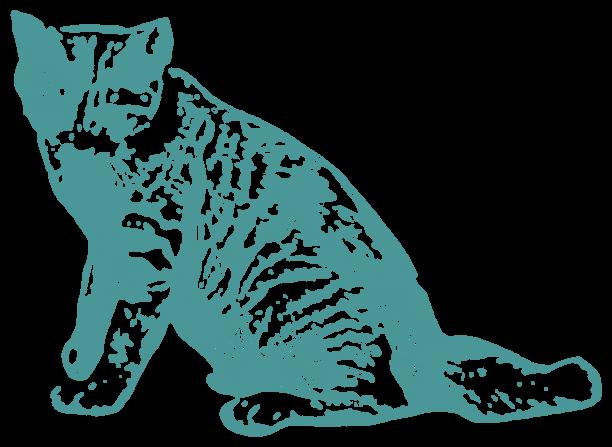トラ猫(動物)