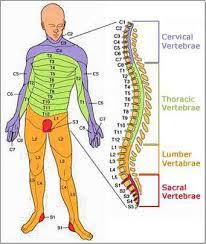 c5 spine
