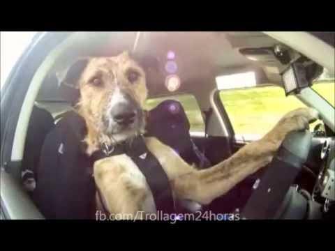 Cão que aprendeu a dirigir dá primeira volta sozinho!