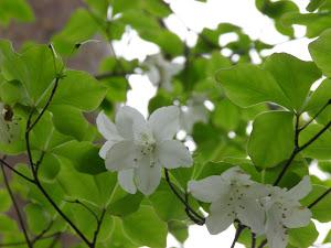 東京 賃貸マンション Blog の花