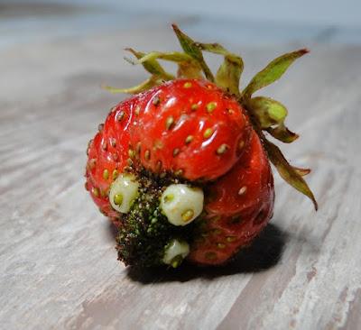 fraise bizarre