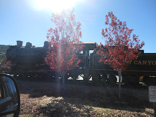 Train and trees