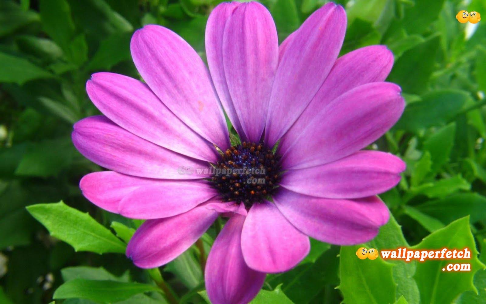 http://2.bp.blogspot.com/-io9KbRyzWGY/T6GHuZ-h2HI/AAAAAAAAK1c/t1CF3R492v8/s1600/Purple_Flower_HD_Wallpaper_1440x900_wallpaperhere.jpg
