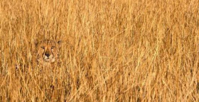 Animals Camouflage Picture