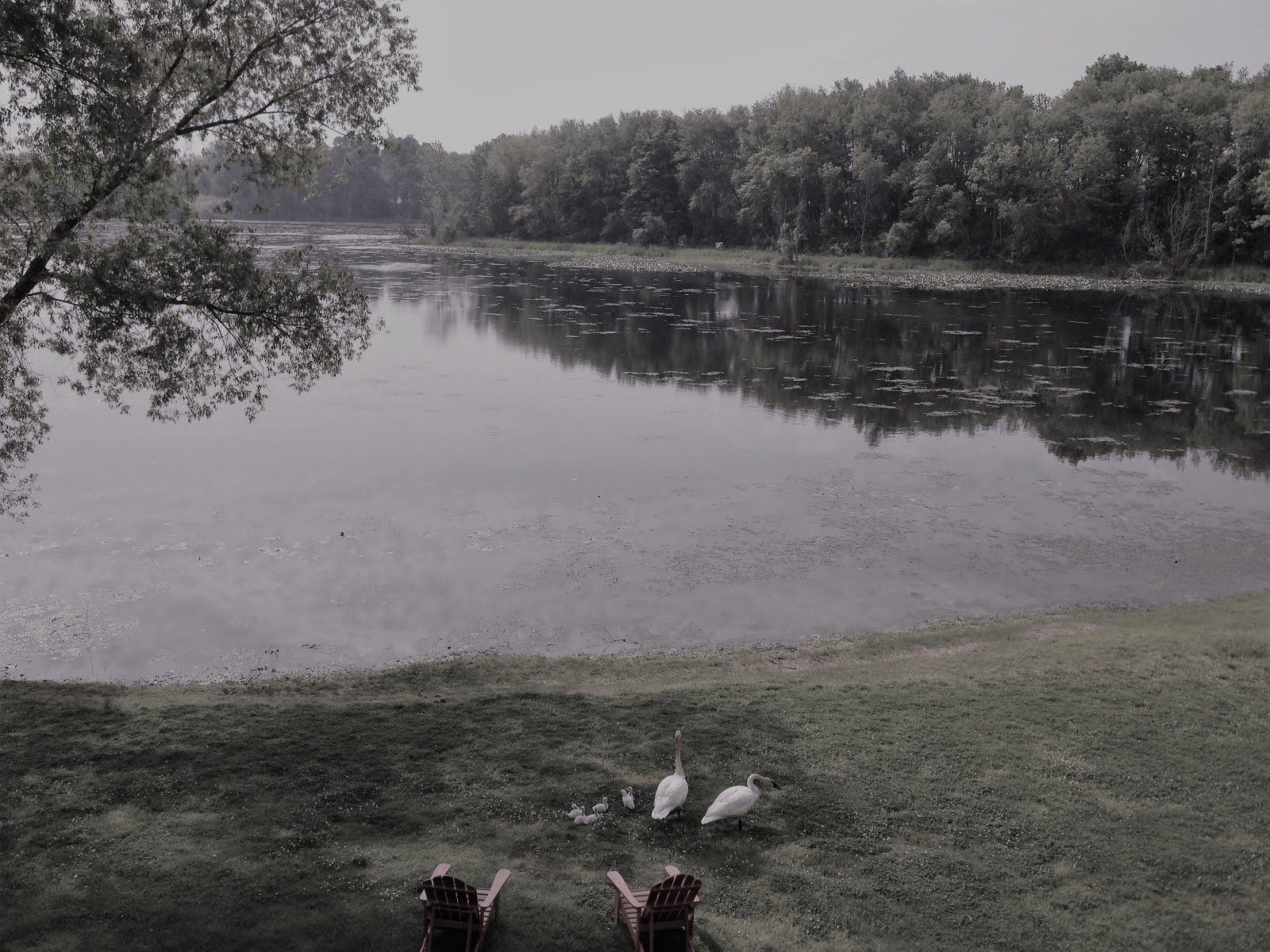 Swan Residents