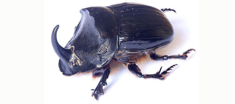 Boletín Sociedad Andaluza de Entomología Vol. 22