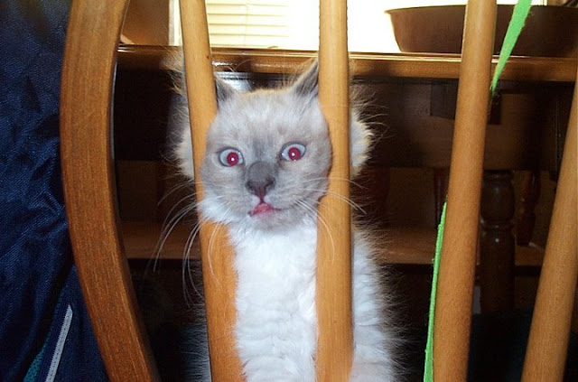 cat with funny face, funny cat photos