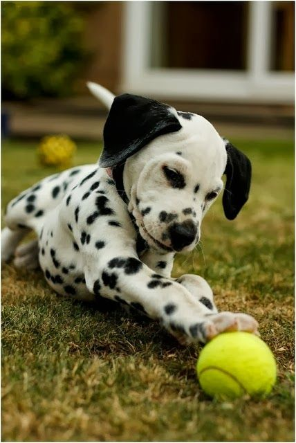 The 5 Best Dog Breeds for Childr