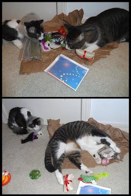 Anakin & Trixie catnip & toys!