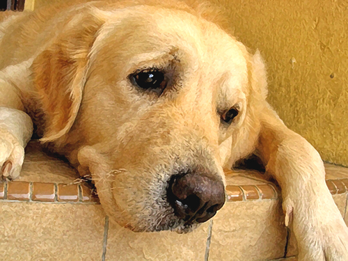 Can My Dog Help Me With Depression
