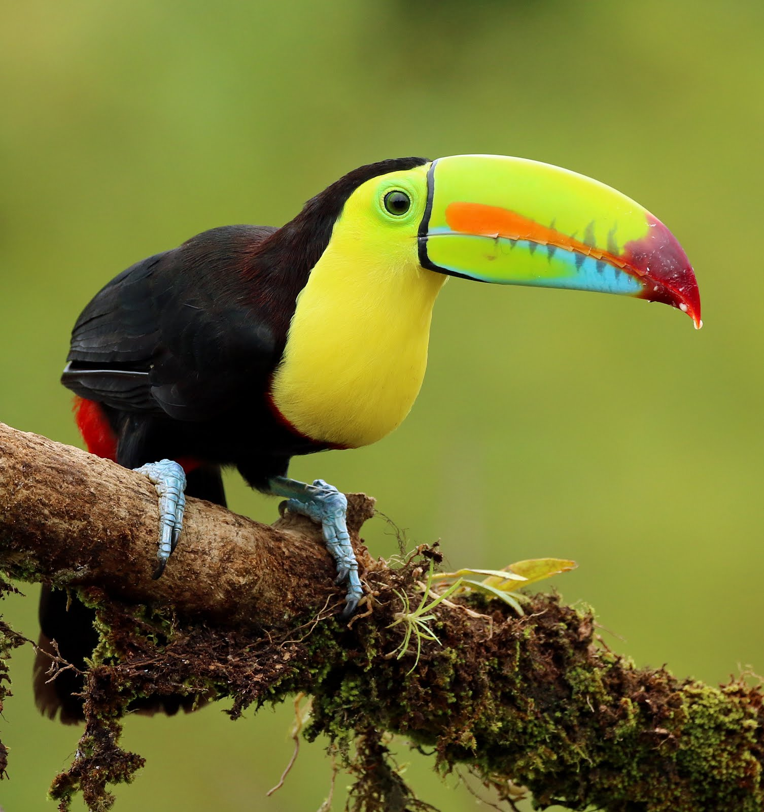 COSTA RICA a birders paradise         23rd March to 6th April,  2019
