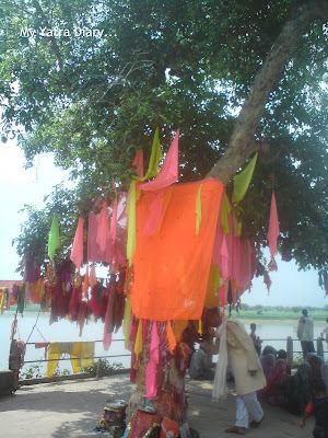 The sacred Peepal tree, Brahmand Ghat in Mathura